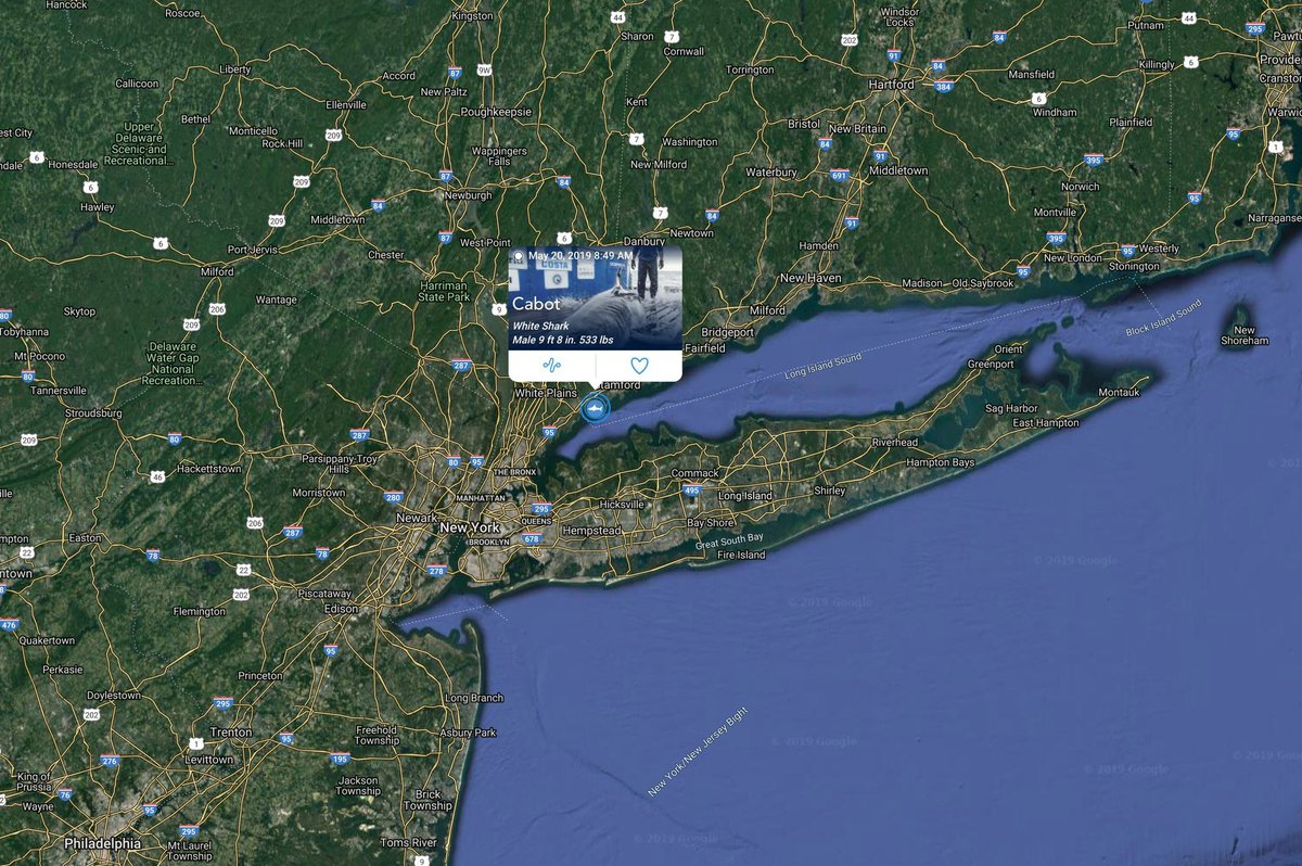 A great white shark is tracked in Long Island Sound for first time