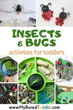 My Bored Toddler - Activities and crafts with insects and bugs for toddlers - a fun STEM and SCIENCE theme for toddlers - perfect for homeschooling #myboredtoddler #sciencekids #stemkids #steamkids #toddleractivity #toddleractivities #preschoolactivity #preschoolactivity #in…