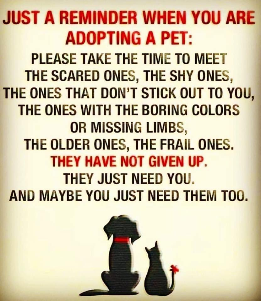 Please take the time.  - #AdoptDontShop #AdoptDontBuy<br>http://pic.twitter.com/tm6scXJfrT