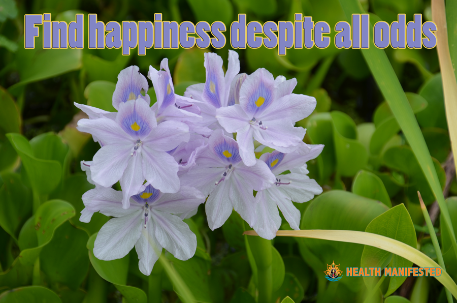 Find happiness despite all odds - Health Manifested  #healthmanifested #success #inspiration #motivation #believe #life #quote #dream #hope #mindfulness #LOA #lawofattraction #power #love #happy #astrology #humandesign