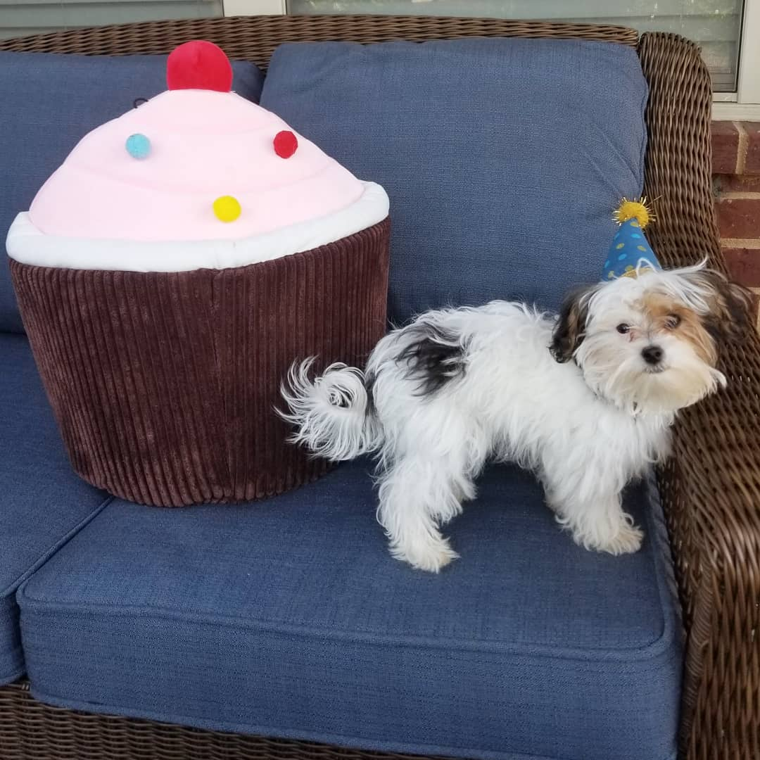 In case you&#39;re having a bad day, here&#39;s a picture of my deaf rescue dog Banjo wearing a birthday hat next to a giant cupcake.  #nationalrescuedogday #AdoptDontShop @dog_rates @darth<br>http://pic.twitter.com/O8NgUcauPZ