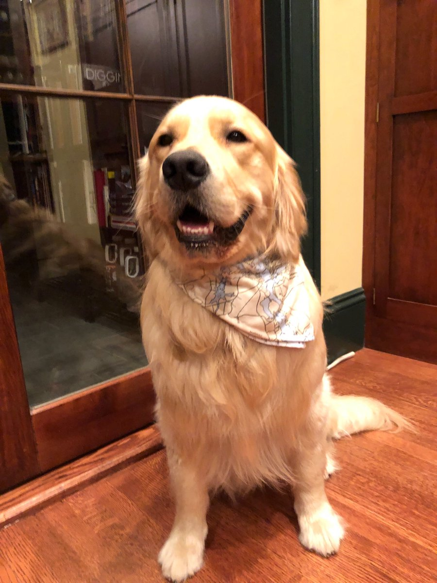 Yesterday, Bailey got to try on his new bandana in Portsmouth, NH. Thank you, @rcdcnh!