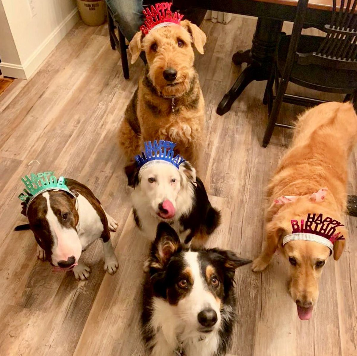Phoebes 1st year Birthday party ! This Motley Crew did a shot of Crown Royal to mark the occasion! #BullTerrier <br>http://pic.twitter.com/K3rWb552qv