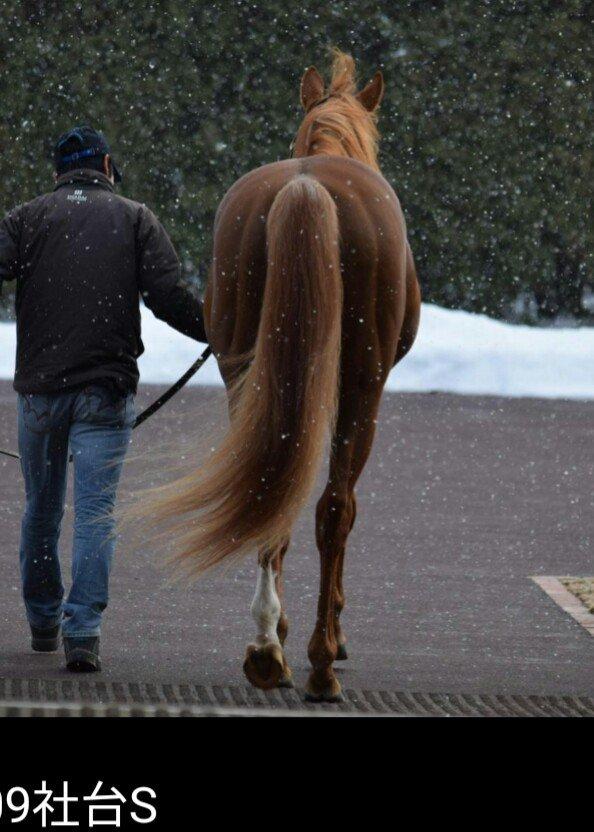 オルフェーヴル&ロックディスタウン父娘の尻で牡馬と牝馬の尻比較。 牡馬は尻からほぼ一直線だけど牝馬は尻と脚の境がわかる。  ロックディスタウン近寄ったら蹴られるのか……。