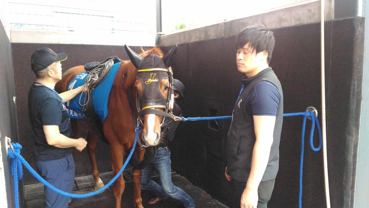 ハッピーグリン、今朝の調教前の写真が届きました。田中淳先生は昨日現地に到着しているものの、4月の落馬負傷の影響で調教は乗れず、服部さんが来るまで元騎手の吉田稔さんにお手伝いをお願いしています。 中央でも重賞をいくつも勝っていて、シーザリオの桜花賞の鞍上でも有名な方ですね。