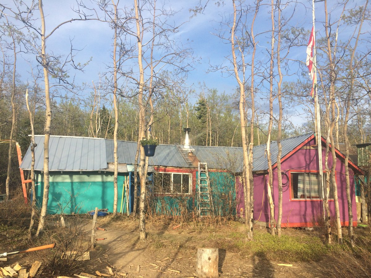 Squirrel camp is looking colourful as always, but the really exciting news is that the trees are starting to turn green! #YukonGreenUp #springishere @KluaneSquirrels<br>http://pic.twitter.com/AQCdcWT6Di