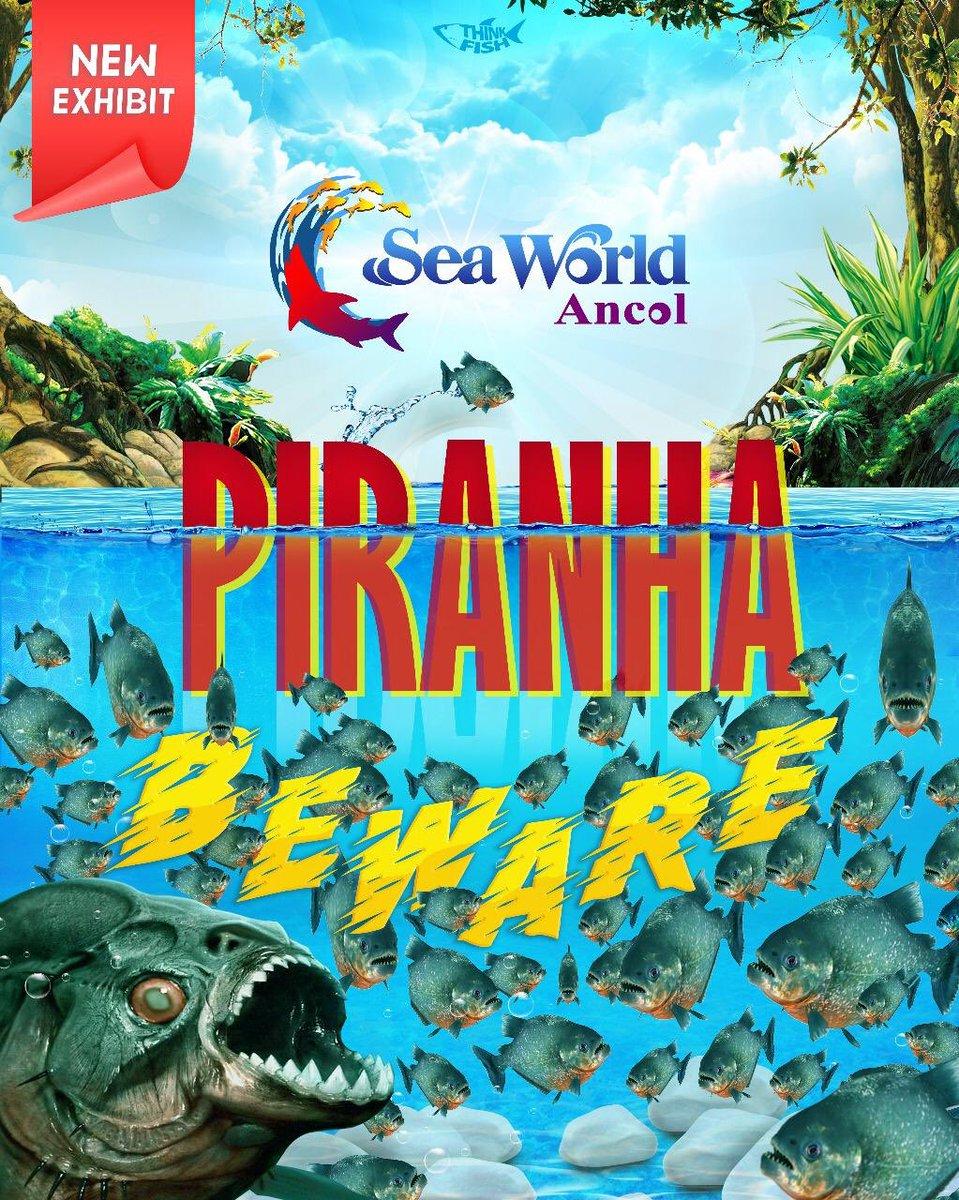 ⚠BEWARE PIRANHA!!!⚠ Ribuan ekor piranha hanya ada di SeaWorld Ancol! #SeaWorldAncol