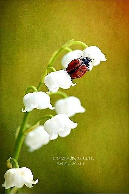 The ladybird,since ancient times,is a symbol of light,beauty,fertility, and like love,has divine connotations;it infuses regenerating energy, passion and tenderness to the soul, and makes us participants in life&#39;s projects for us: a new love that is on its way to enter our life<br>http://pic.twitter.com/KAkEGSQKEz