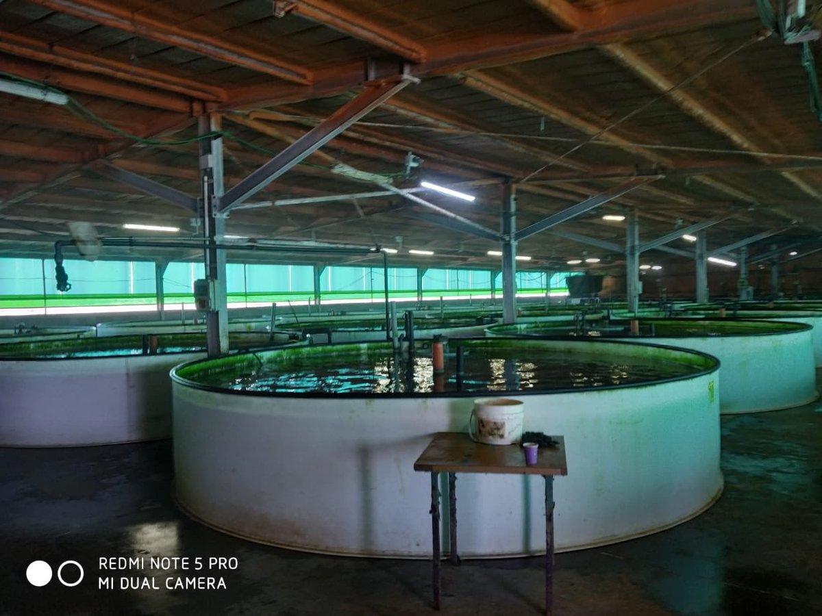 "2nd day of 🐟 ""🇮🇱frontier Aquaculture Technologies"" focused on intensive fish culture systems & applied technologies in the coastal region. @MASHAVisrael @IsraelinIndia @MATCShefayim"