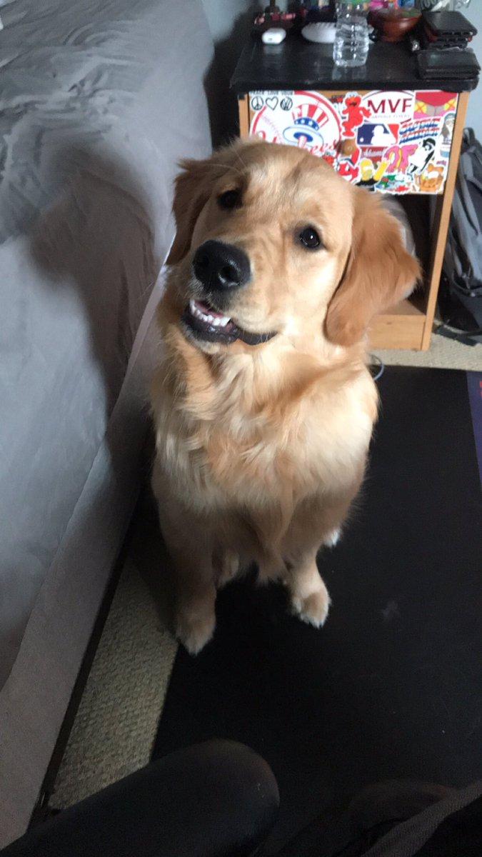 He has the same birthday as my dog Samson