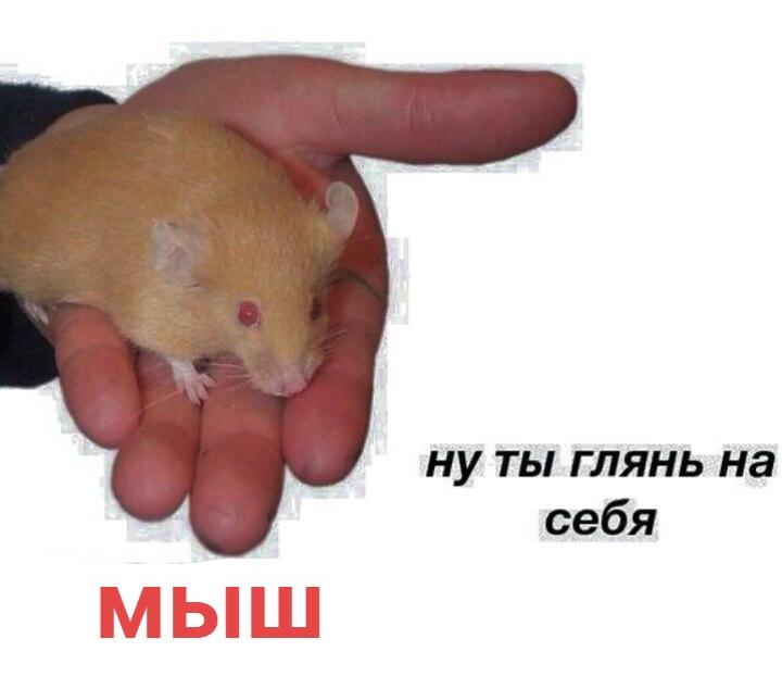 Картинки с надписями люди какие же вы крысы, приколами пивом