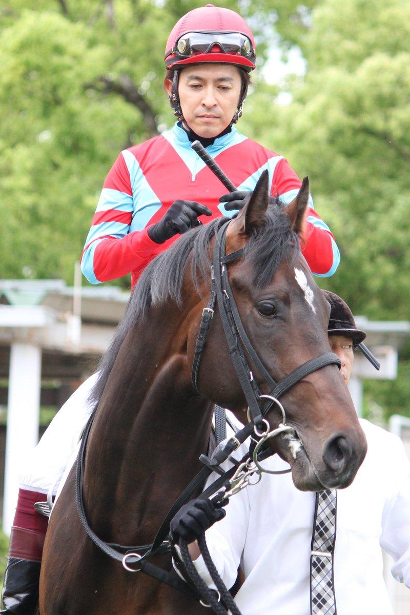 2019年5月18日 京都2R3歳未勝利 イグナーツ(福永祐一騎手) 2番手から抜け出しての快勝でした。 デビューから5戦目での初勝利となりました。 ダート変わり2戦目で未勝利突破です。 ディープインパクト産駒 母:ラフアウェイは1600万下勝ちの実績馬。 母父:タイキシャトルという血統 中竹和也厩舎の管理馬