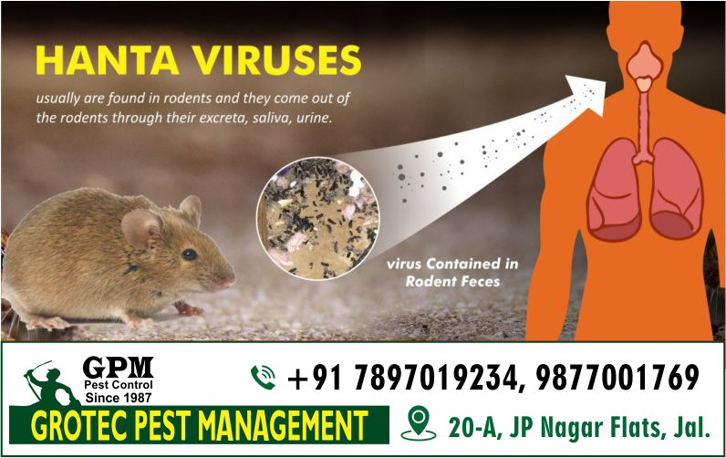 Having a Mouse Problem? We can help! Get in touch with us and avoid #hantavirus. Request a call: +91-7837019234.  #Health #Infection #Mouse #Wellness #GpmPest #PestControl #PestManagement
