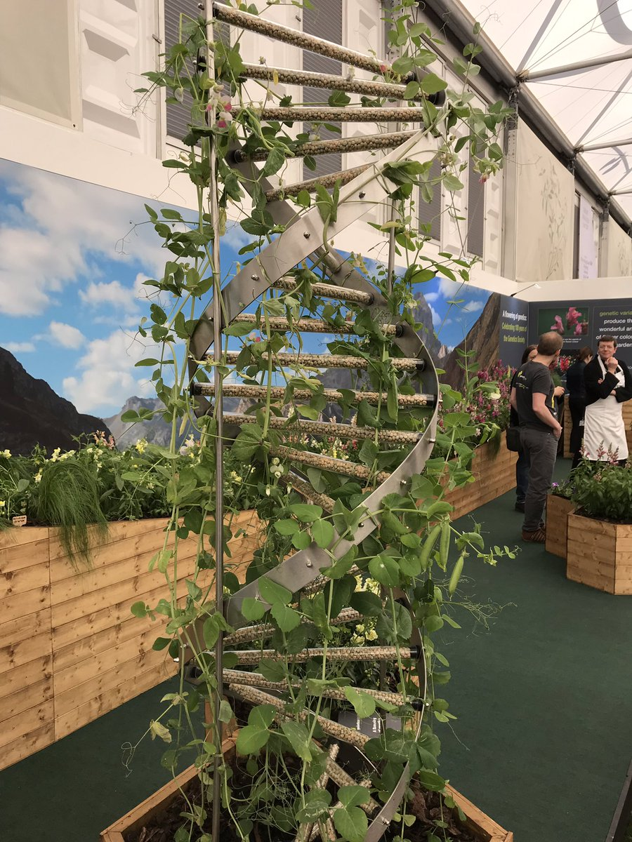 Delighted to win a silver medal at #RHSChelsea with our @GenSocUK Discovery Exhibit 'A flowering of genetics'. Thanks to partners at @TheBotanics and @JohnInnesCentre for all the help.