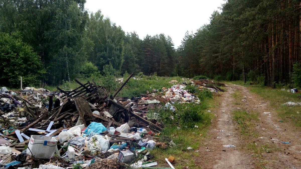 Леса картинки загрязненные