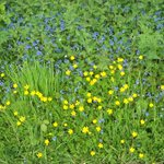 Image for the Tweet beginning: Wildflowers - Grand Western Canal,