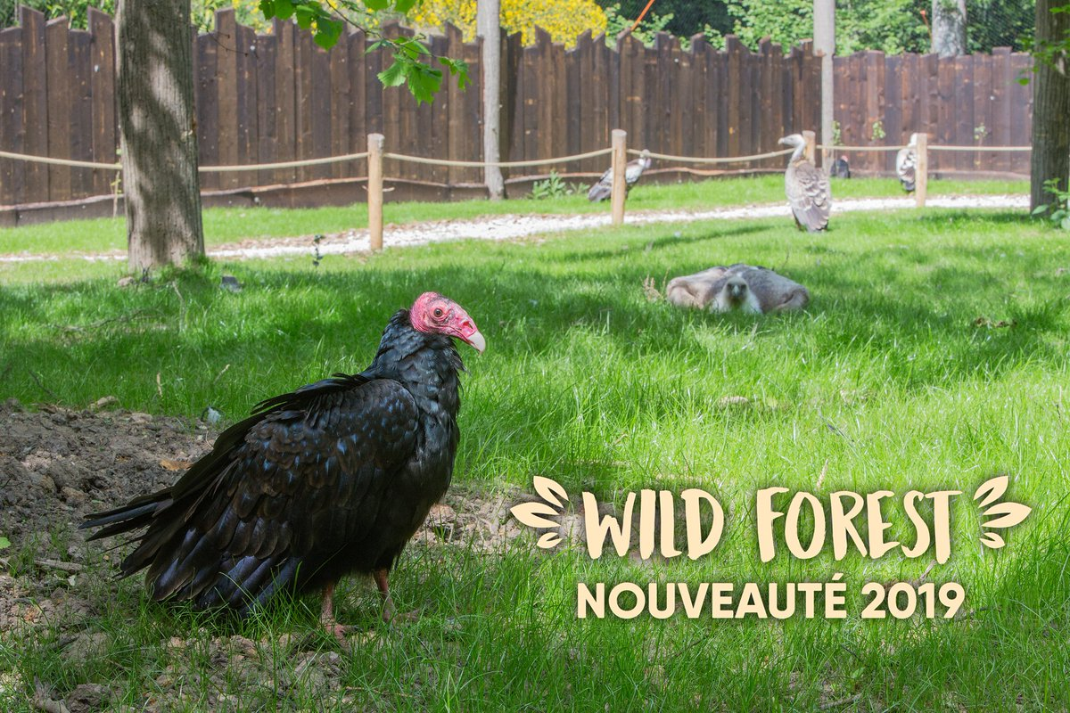 NOUVEAU ! A partir de demain découvrez la Wild Forest, une volière de 500m² en immersion avec les rapaces et bien d'autres surprises.#zoo #nouveauté