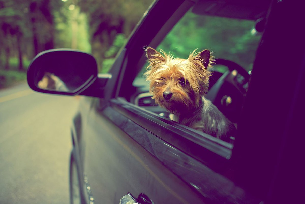 Are you traveling for the long weekend? Here are some tips for bringing your dog along! bit.ly/2QhqtJ5 #memorialdayweekend #memorialday #traveltips #pethealth