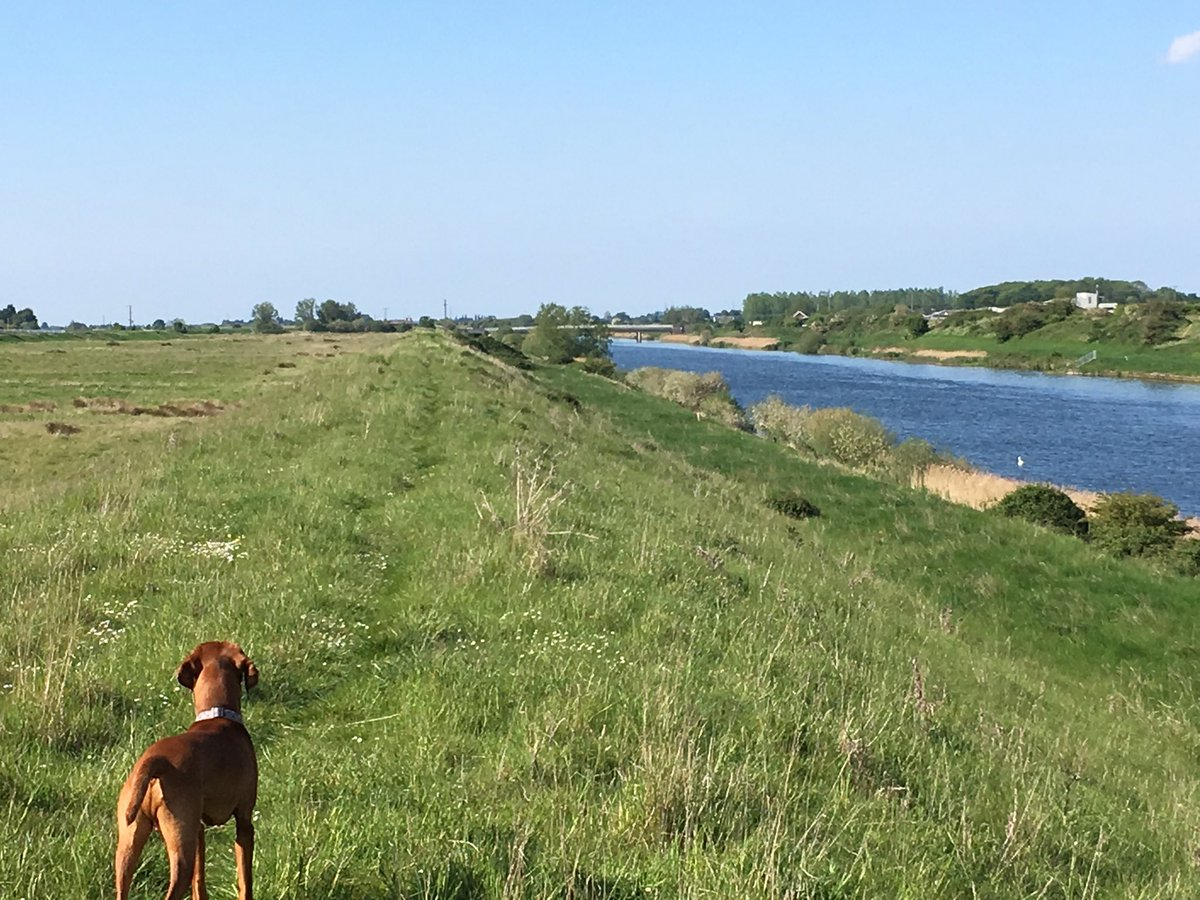 What a glorious afternoon. #Fens #Stowbridge
