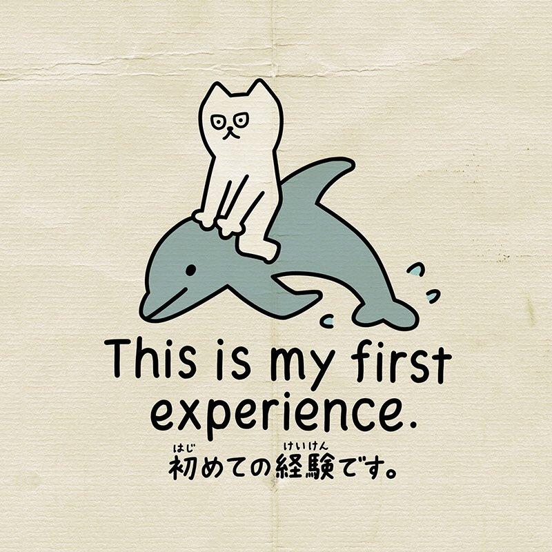 (English) This is my first experience.(Japanese) 初めての経験です。(Romaji)  Hajimete no keiken desu.———#しろねこトーフ#英会話 #英語 #日本語 #English #Japan #Nihongo