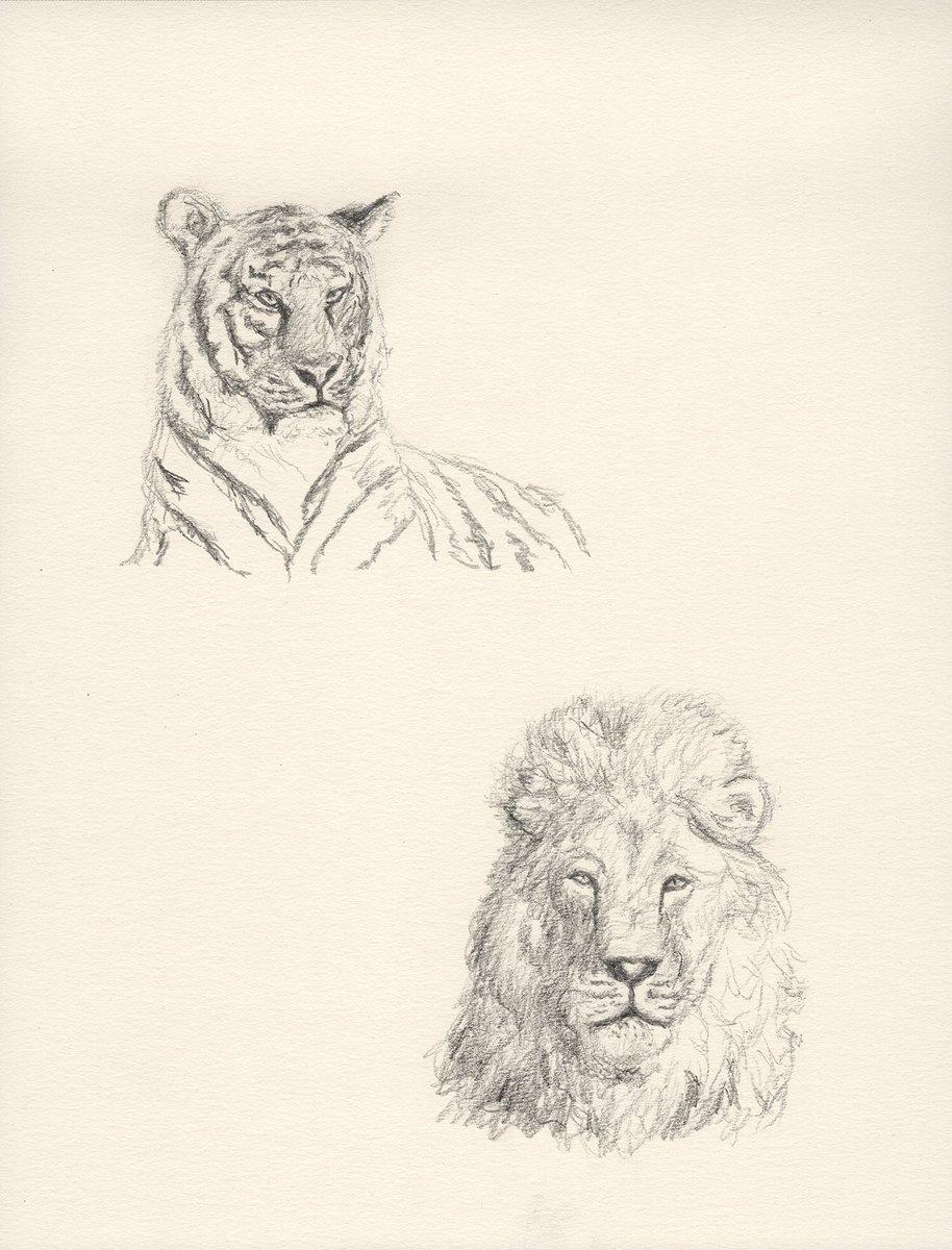 RT @DanTabata: Big Cats - pencil #drawing #pencil #graphite #animals #tiger #lion https://t.co/dpupGjqnAO