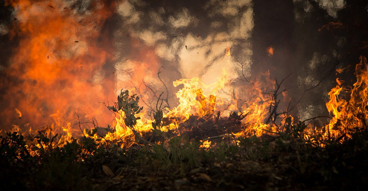 test Twitter Media - Flood and Fire Season! Great Resources for Supporting Client Trauma during a Natural Disaster. https://t.co/1d2rSfIHrV #forestfire #client #trauma #emergency #naturaldisaster #Flood #response #socialservices #humanservices https://t.co/wtT0f0Qe6N