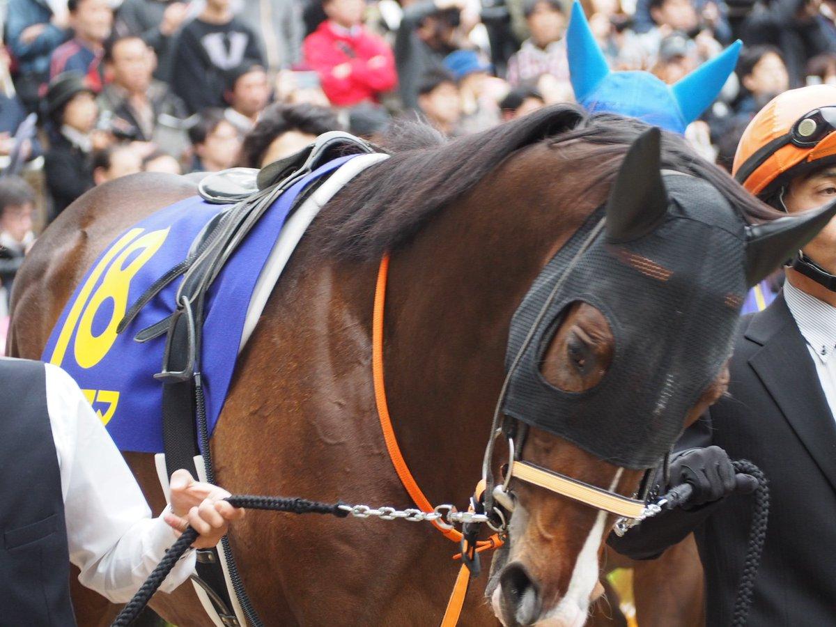 道営からの夢を乗せてナイママ!ここ最近は中央の競馬にも馴れてきて前走も悪くないレース内容。早いタイムが無いだけにそこをどうカバーするか。道営と岡田総帥と大知の夢を乗せて! #ナイママ #柴田大知 #日本ダービー