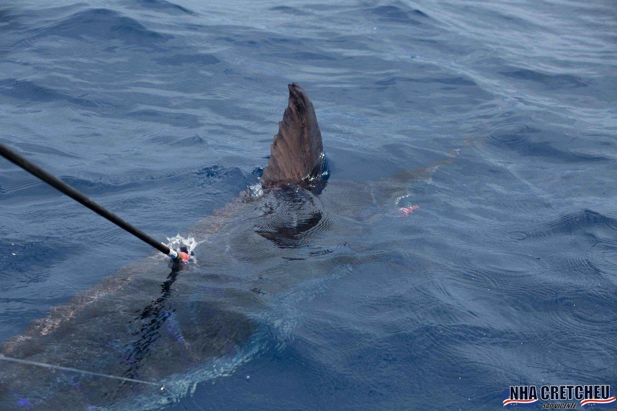 Cape Verdes - Nha Cretcheu went 3-4 on Blue Marlin.