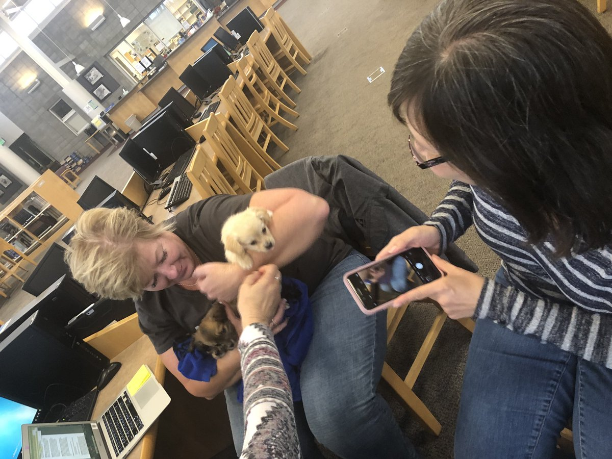 Best board meeting ever. Amy O brought puppies! @LosGatosHigh @LGSUHSD #LGSUHSD #golgcats @saratoga_high #gofalconpower #1CoolThing @hrhjulieg @yeamanjm can we have puppies at all meetings? I'll draft the memo.<br>http://pic.twitter.com/vhC0Q6yISo