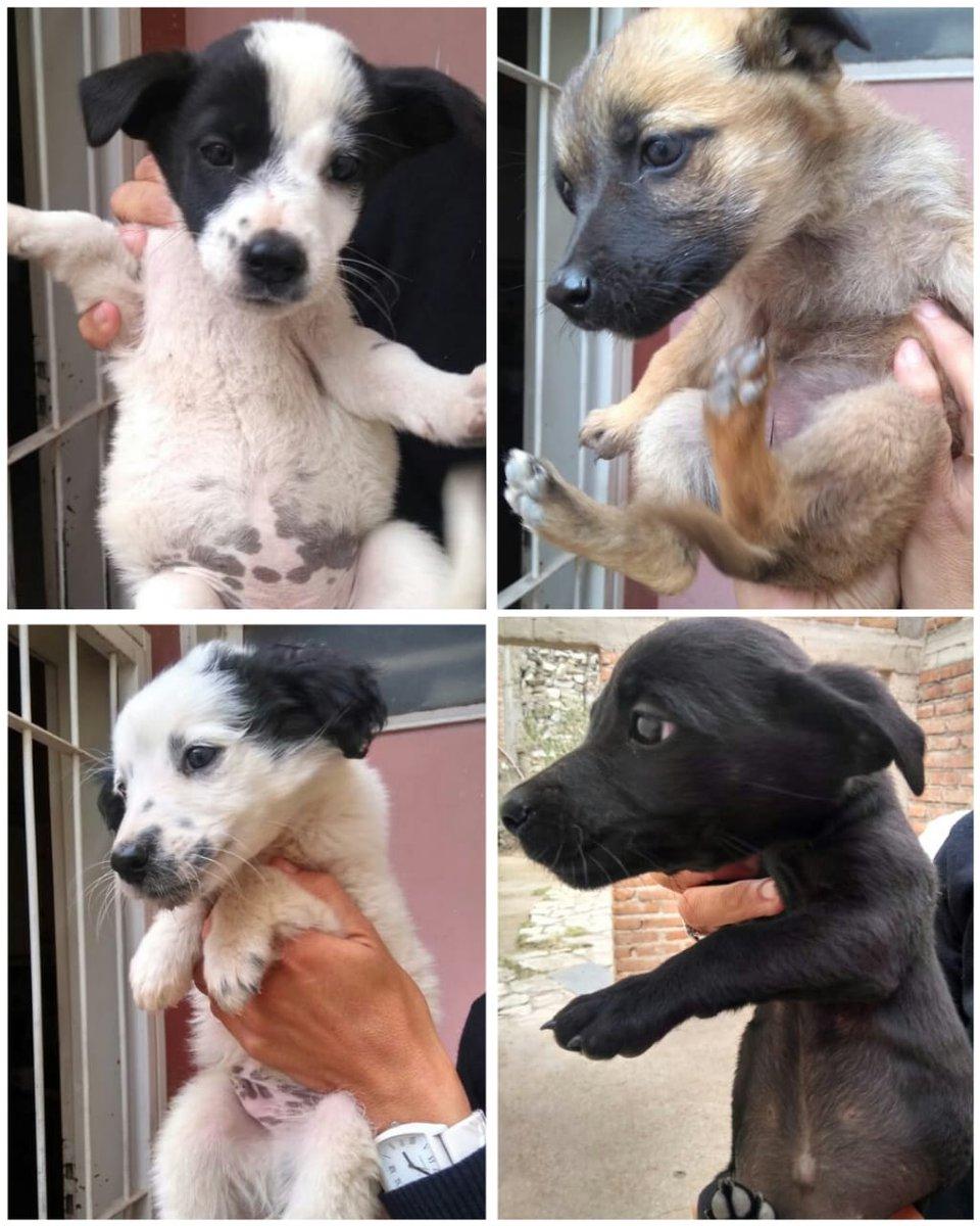 Por favor DIFUNDIR!! quedan 3 cachorritas y necesitan un hogar urgente para poder pasar este invierno 🙏🙏🙏🙏 San Luis!!