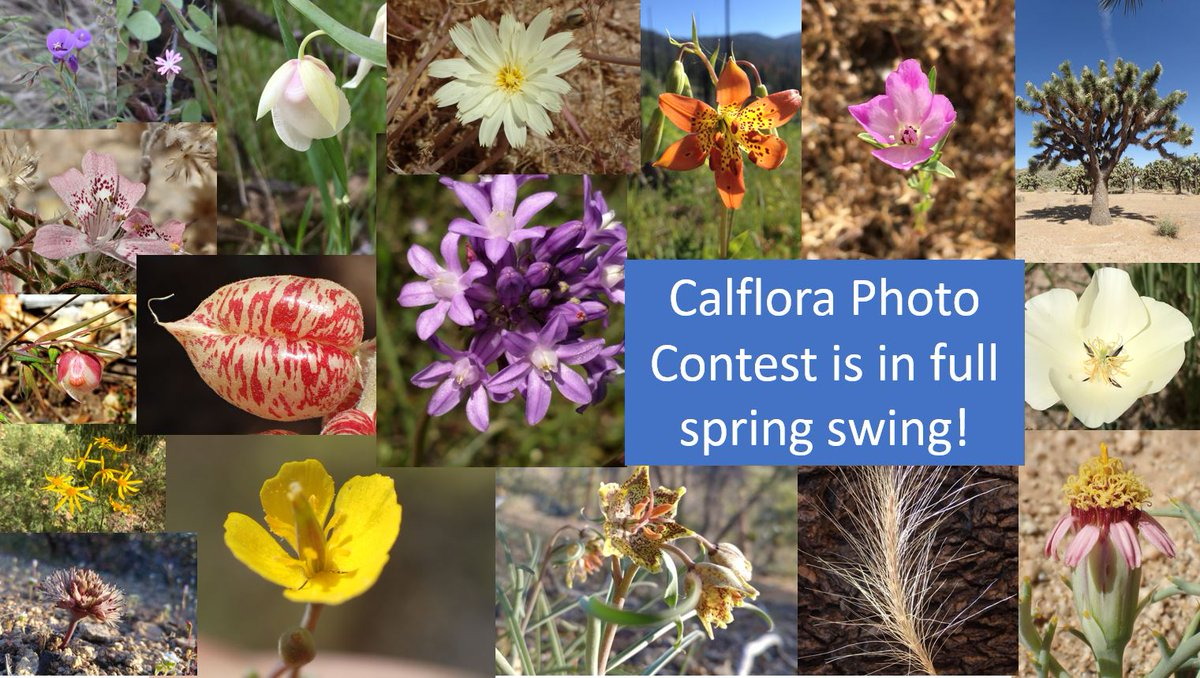 Calflora Database (@Calflora) | Twitter
