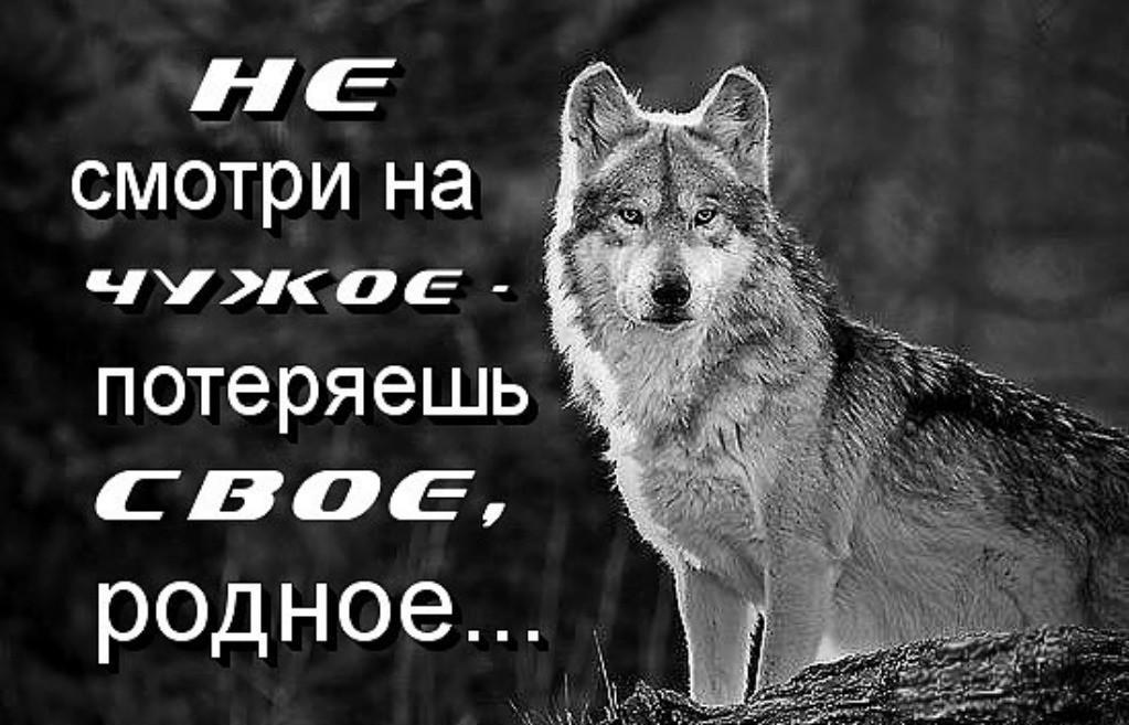 Картинка волка с надписью никогда не проигрываю, прикольный плот открытка