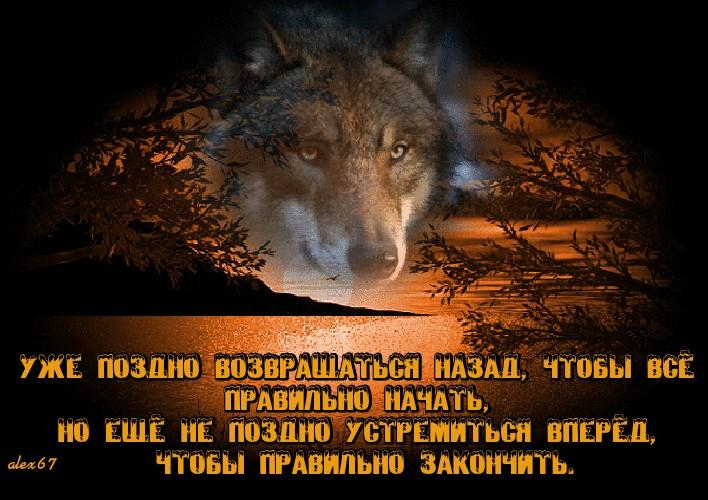 Картинки с волками и надписями про жизнь со смыслом новые зимой, день рождения