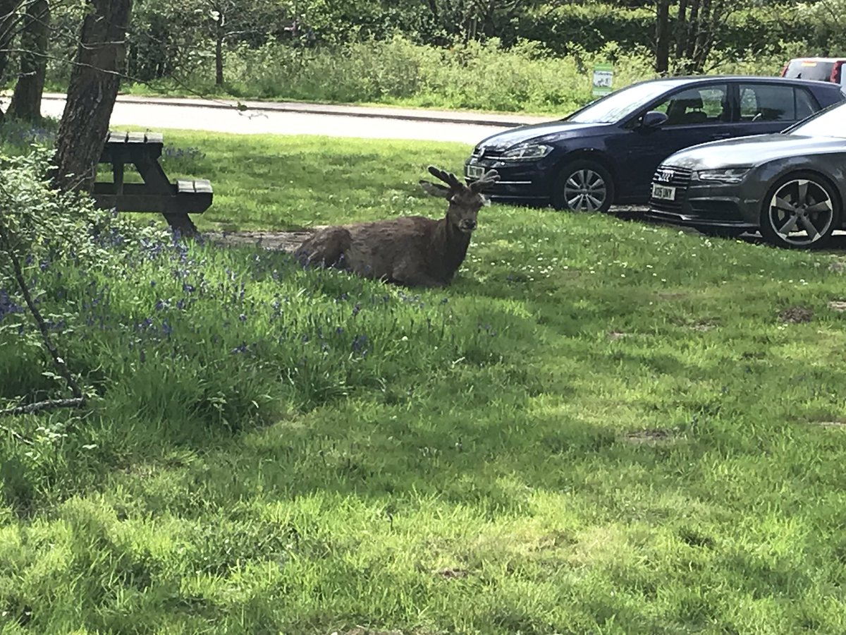 RT @peggysue1953: Red deer guarding our car at Glen Nevis. https://t.co/wZNf5x18jD