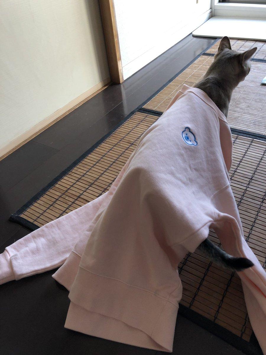 会社を退職するときに、認定ファイルやら、制服を返却するんだけど、こないだ届いた新品を部屋着にしてるのは秘密です!あと、転職サイトからスカウトがきて今の会社のフランチャイズのオーナーだったw近くなら行きたいのに、川崎駅じゃなぁ…