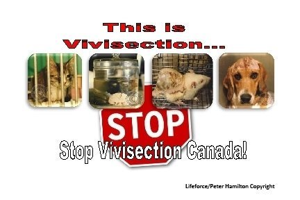 Help to stop vivisection in Canada! Plz sign: https://t.co/4Gky4f2Pup Look at this: https://t.co/AVmHjZs9eI https://t.co/rrPC9bn5kR