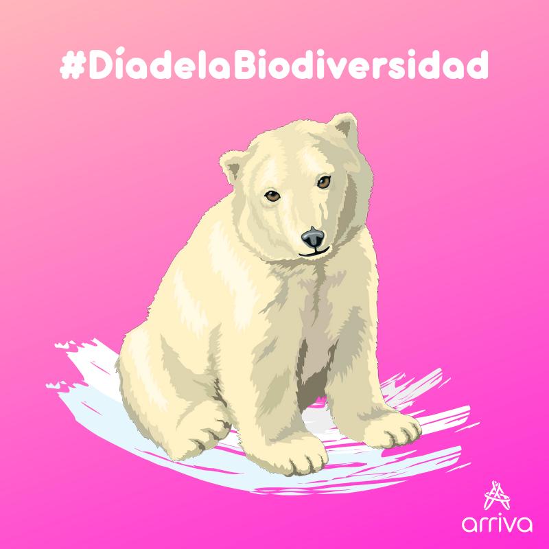¡Hoy se celebra el #DiaDeLaBiodiversidad y se lo dedicamos al Oso Polar! El #OsoPolar es un animal que está amenazado vilmente por la contaminación y el #deshielo de los cascos polares. #FelizMiércoles