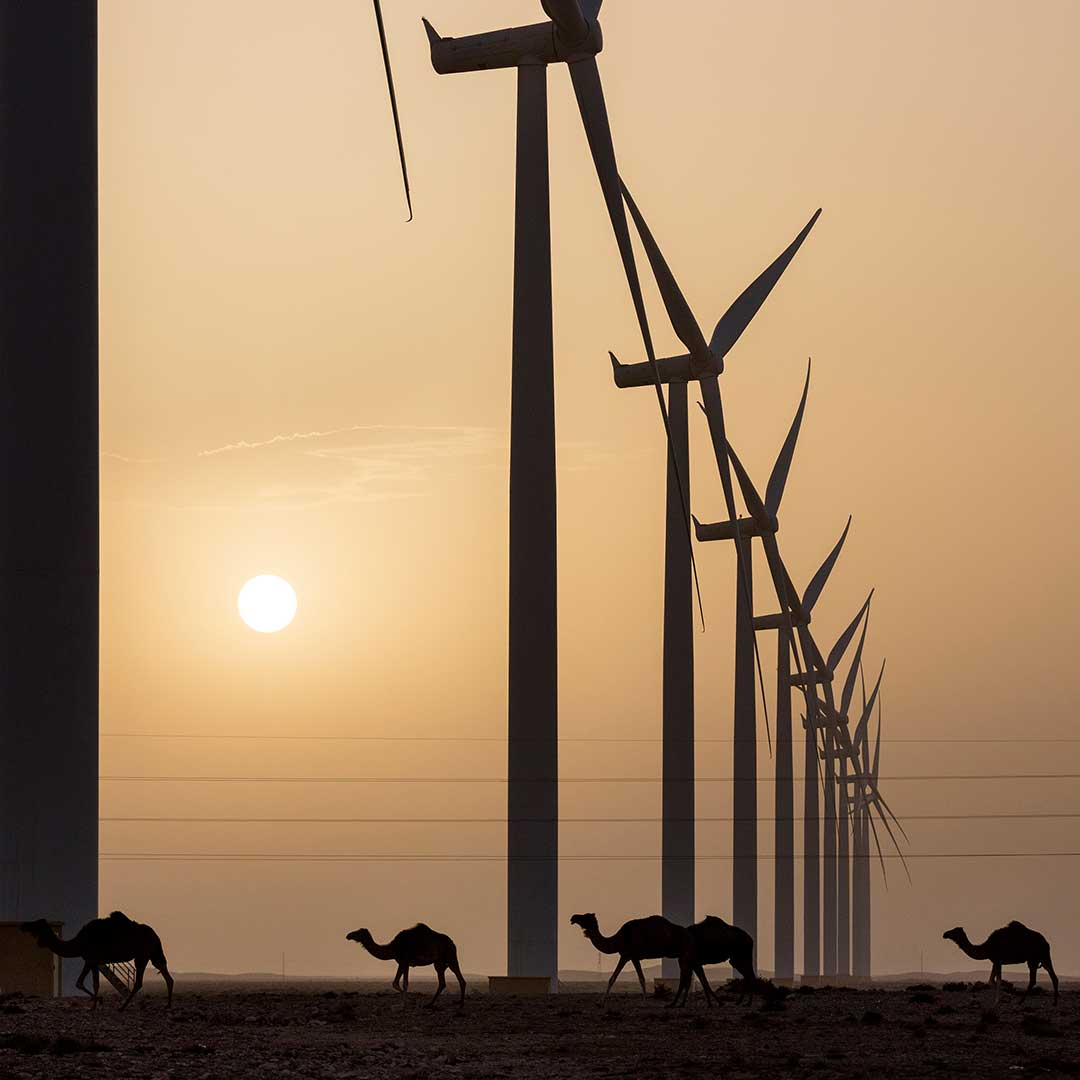 """Sunset at Africa's greatest onshore wind farm 131 wind turbines... in between dromedars peacefully passing through"" Captured by Paul Langrock in the 2018 #globalwindday photo competition 📸 💚  To enter the 2019 Global Wind Day photo competition visit https://t.co/rSfJoU0CuI"