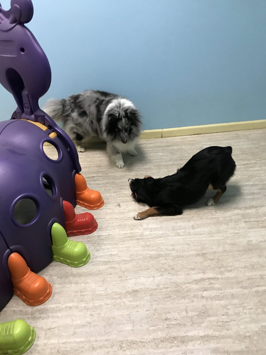 Gracie asks Remy to play