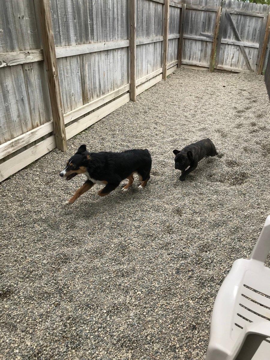 Linus and Gracie race!