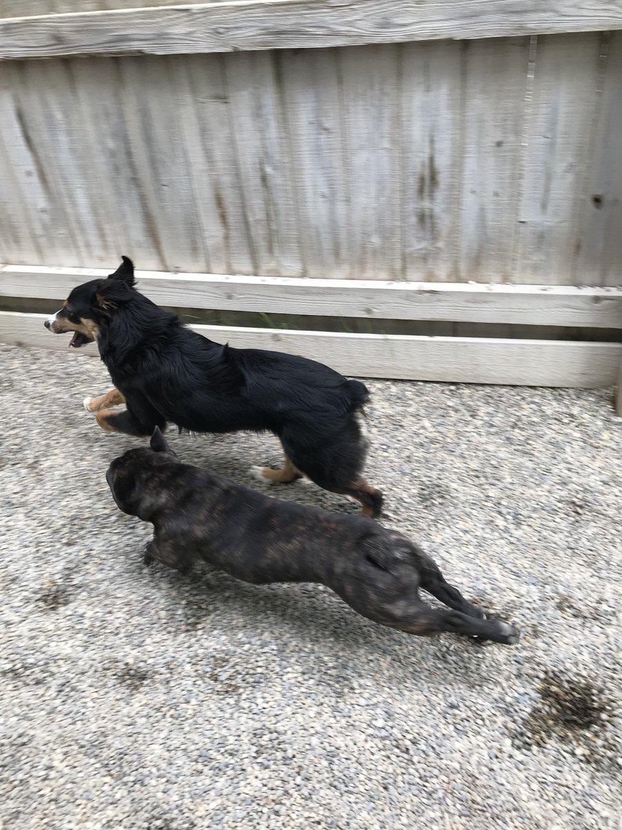 Linus and Gracie are SO fast
