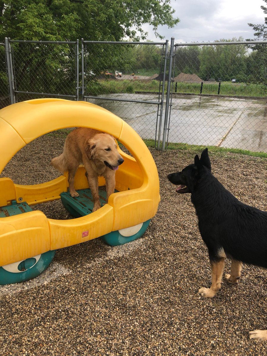 Gunner and Felix play hide and go seek.