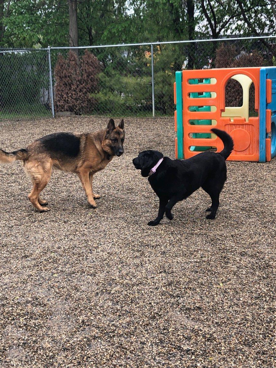 """Greta says """"play with me, Bracken!"""""""