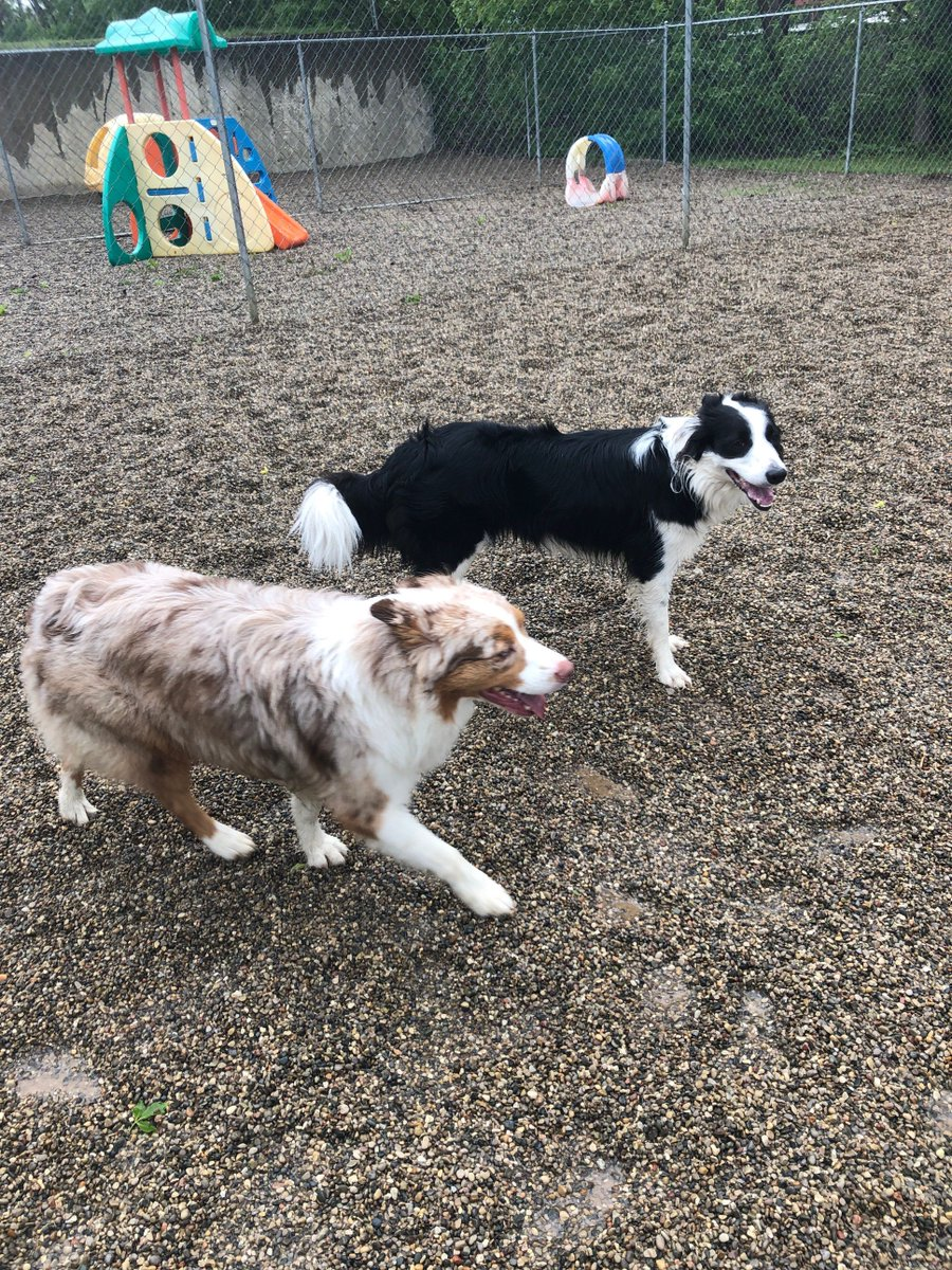 Riley and Ruger take a break to relax.