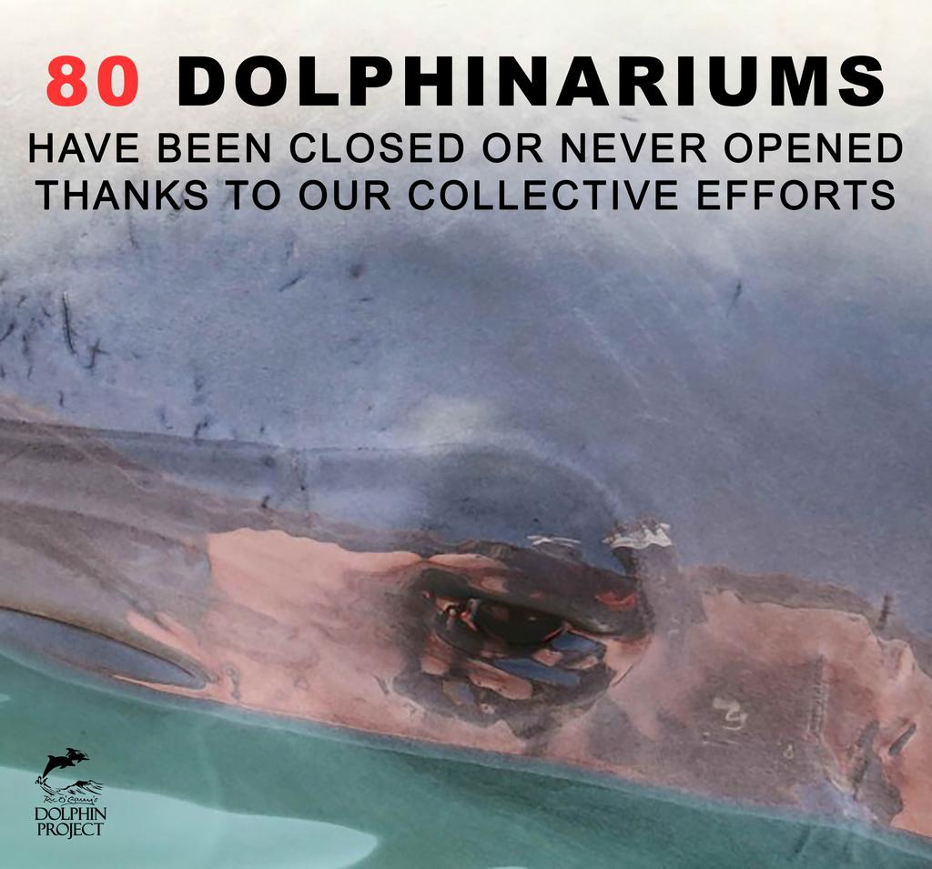 And the list is growing! Thanks the work of #DolphinProject and grassroots activists, countless dolphins have been spared from a lifetime of suffering.  See the full list of closed dolphinaria:  https:// bit.ly/2FrQX6Y      #TogetherWeMakeADifference #EndDolphinCaptivity<br>http://pic.twitter.com/34hVRlpPkA