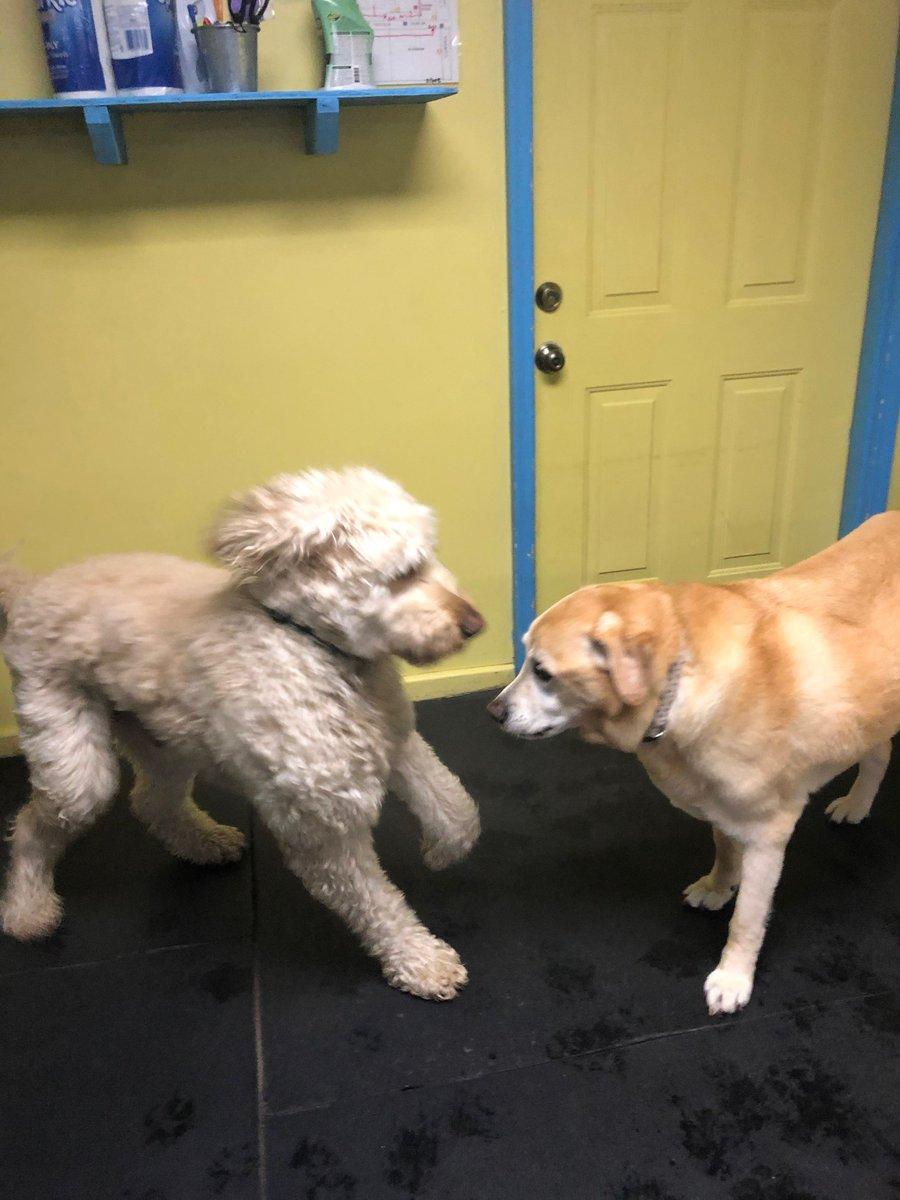 Remington asks Molly to play.