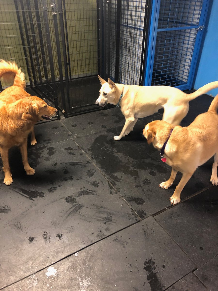 Maggie Mae, Hachi, and Clary ask each other, how their day is going.