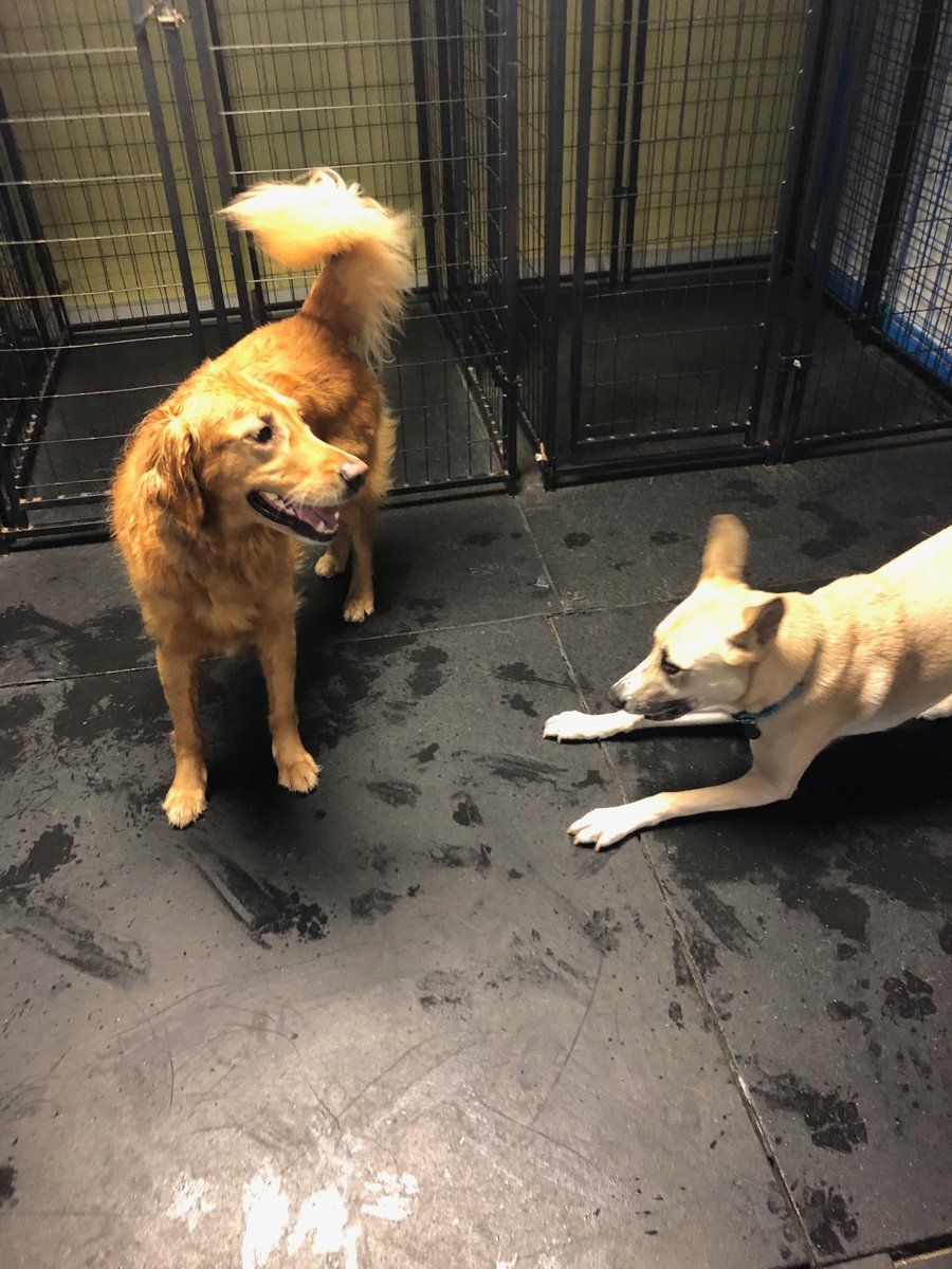 Hachi asks Maggie Mae to play.