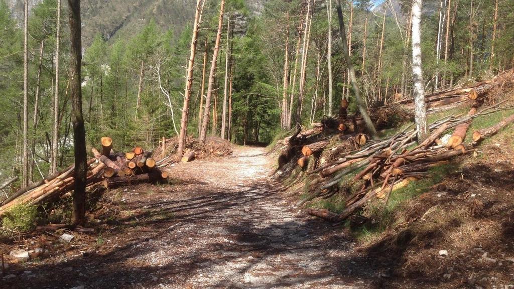 Ancora alberi sui sentieri: «È tutto da rifare»...