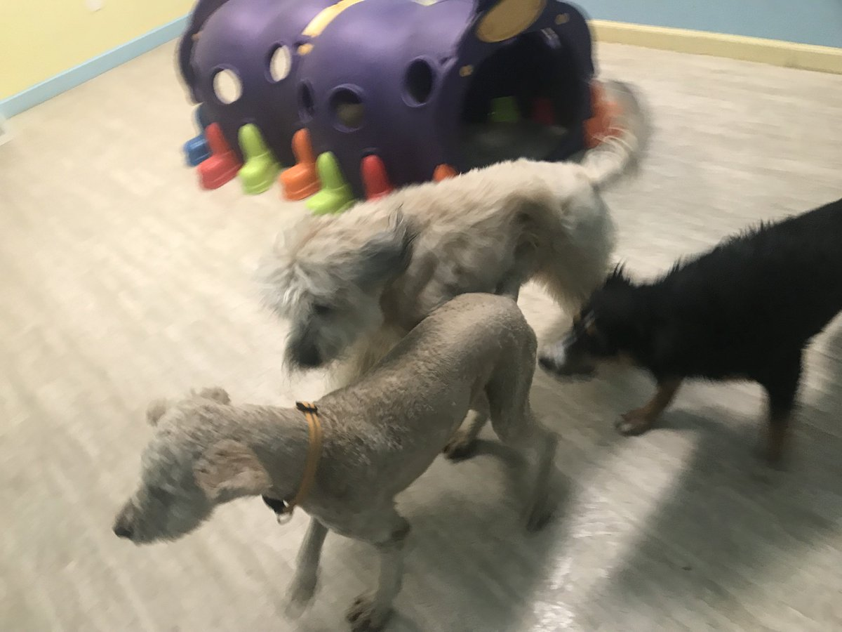 Cooper, Gracie, and Luna are having so much fun today!